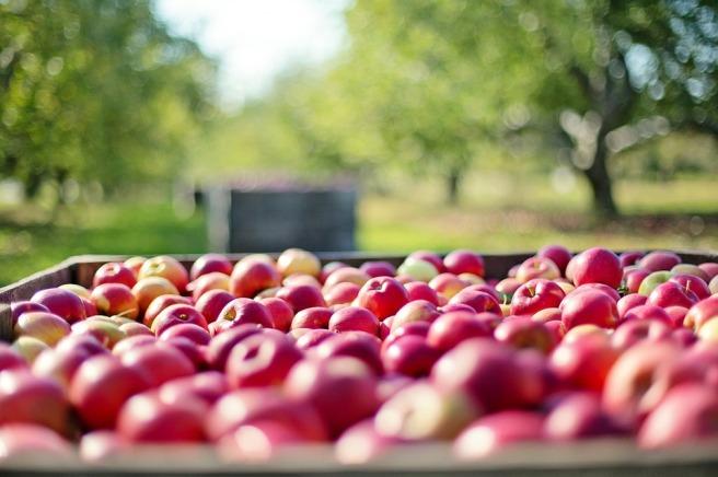 arvore frutos